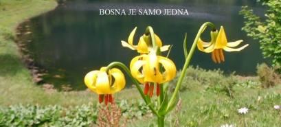 Liljani - Bosna je samo jedna